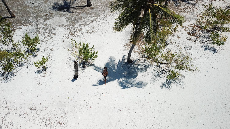 Palmtree Shade